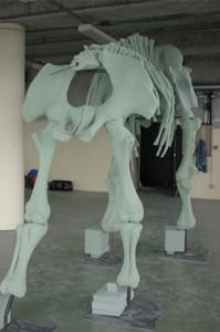 Squelette mousse 2